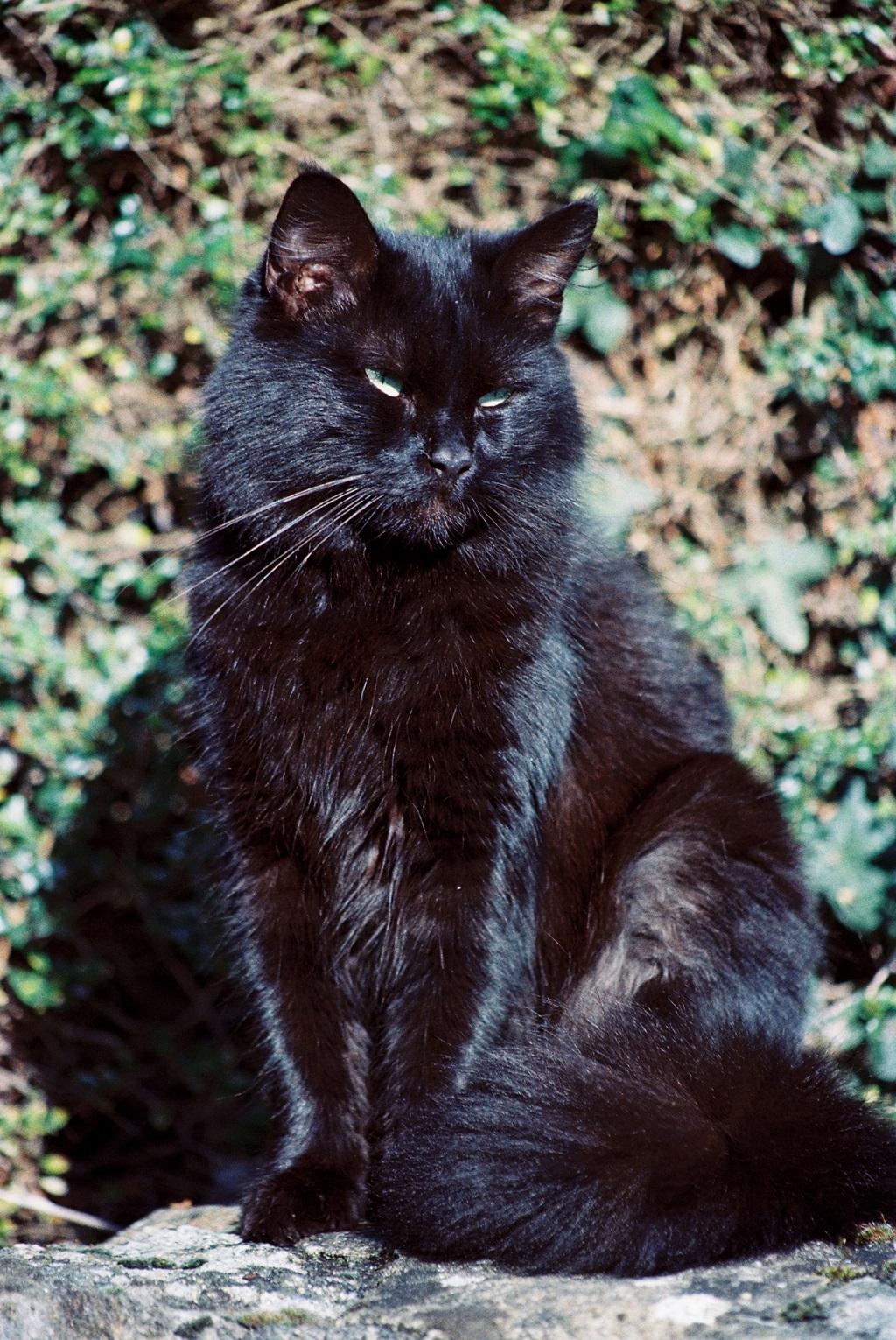 Le-chat-noir-et-les-pilotes- Photo-Thierry-Le-Bras